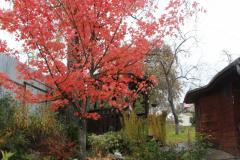 Уникальная красота осени (фото В.Кузьмин, октябрь 2021)