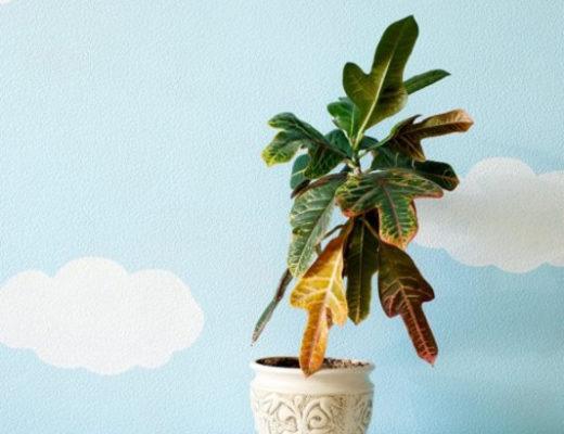 25 проблем комнатных растений, которые можно определить по листьям. © bobvila