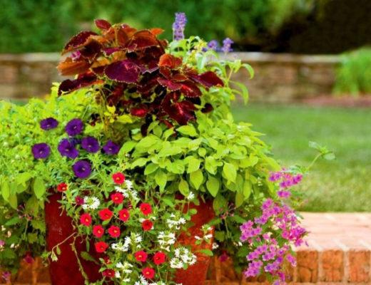 Лучшие комнатные растения для контейнерных композиций в саду. © Beverly Johnson