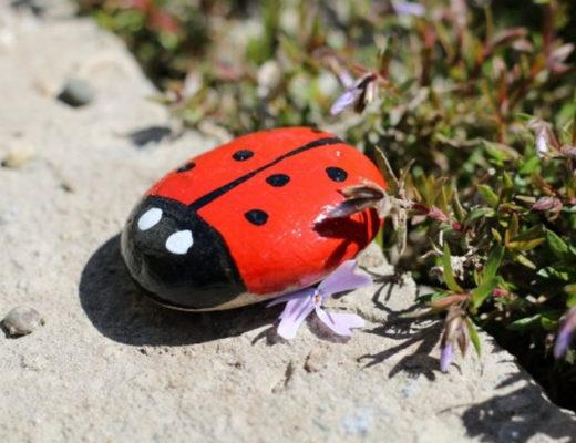 Красочные камни для сада своими руками — творим с удовольствием! © Оксана Гула