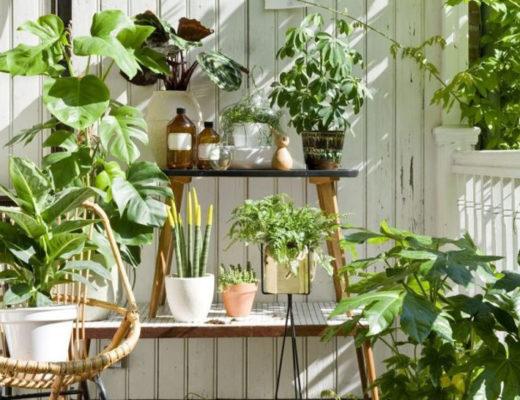 Какие комнатные растения любят пожить летом в саду? © luoow