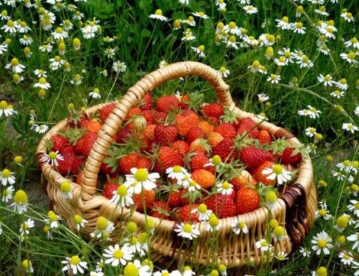 Что не забыть сделать в июне садоводу? © hdwallsbox