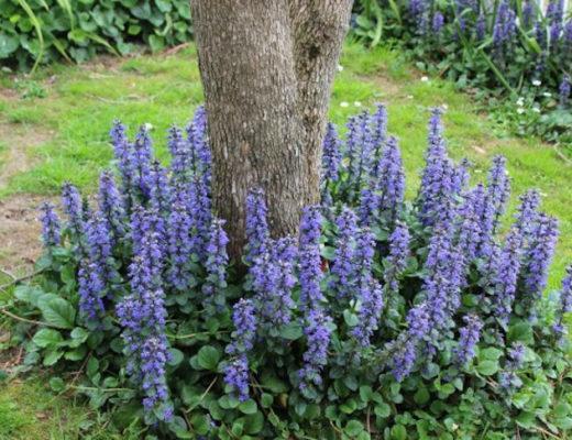 7 лучших растений для приствольных кругов