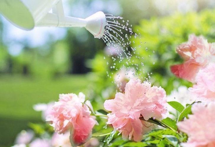 Лунный календарь садовода и огородника на июнь 2021