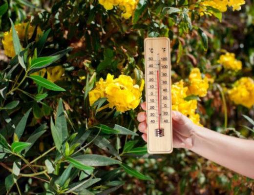 Жара — не в радость, или Как бороться с тепловыми расстройствами здоровья?