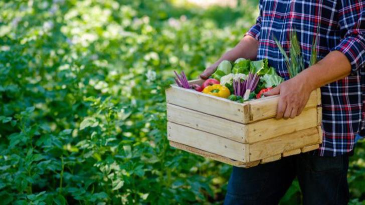 Лунный календарь садовода и огородника на август 2021