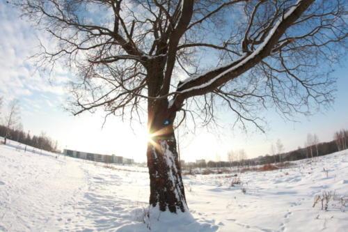 Природа Клина и района (фото: В.Кузьмин, 2021 год)