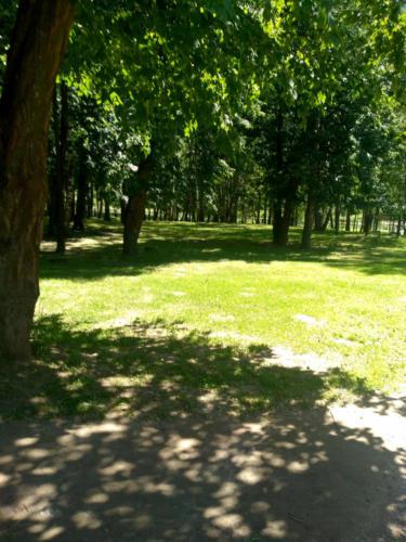 г.Клин, Сестрорецкий парк (фото infoce-klin.ru, июнь 2021 года)