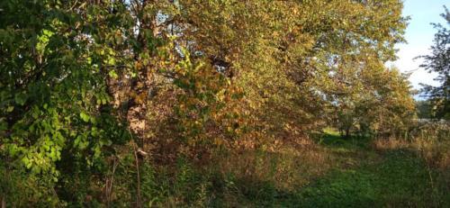 Золотая красота осени (фото В.Кузьмин, сентябрь, 2021)