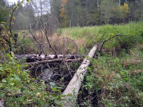 Частичка природы, фото В.Кузьмин, сентябрь, 2021