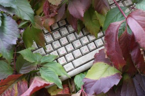 Осенняя игра красок (фото В.Кузьмин, октябрь, 2021)