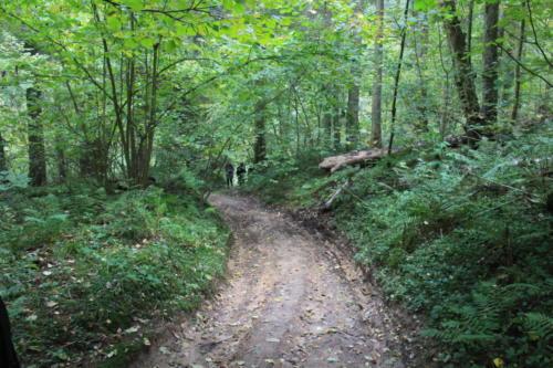 Старая дорога (фото В.Кузьмин, сентябрь, 2021)