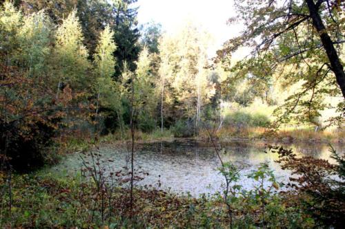 Усадебный пруд (Уникальный поход к могиле Василия Никитича Татищева, фото В.Кузьмин, сентябрь, 2021)