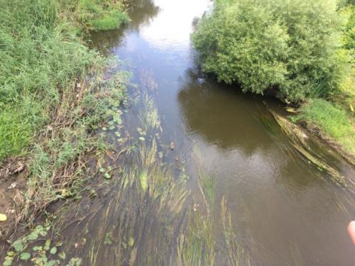 Утки на реке «Сестра» (фото из архива сайта infoce-klin.ru, 2020 год)