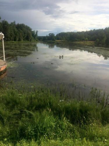 Утки, река «Сестра» (фото из архива сайта infoce-klin.ru, 2020 год)